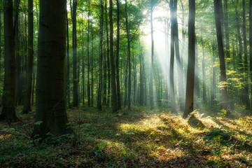 Beautiful sunrise in green forest