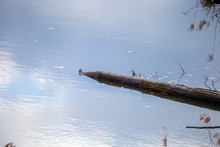 Wooden Deck Floats In The Water In The Middle Of The Swamp