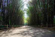 View Of Bamboo Tunnel At Chulaporn Wanaram Temple In Nakhon Nayok,Thailand