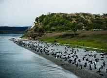 Penguins On An Island On The B...