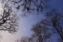 Looking Up Dead Tree Branch