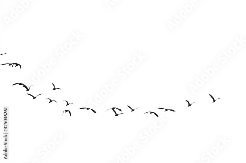 Group of Birds flying in the sky Canvas Print