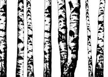 .Birch Trees. Vector Backgroun...