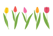 Colored Tulips On A White Background. Colorful Flowers For Your Design.