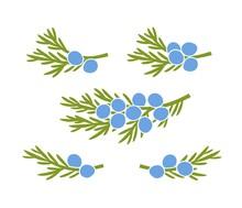 Juniper Berries Logo. Isolated Juniper Berries On White Background