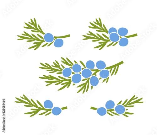 Fototapeta Juniper berries logo. Isolated Juniper berries on white background obraz