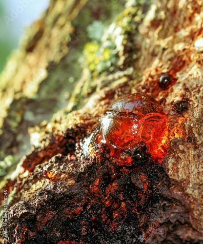 Fototapeta Tree natural red amber resin– stock image