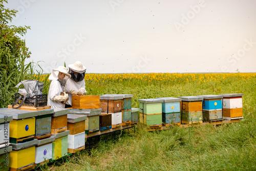 Beekeepers working beside sunflowers field Canvas Print