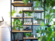 Green Interior With An Industrial Open Shelf Cupboard Filled With Numerous House Plants In Pots Creating An Indoor Garden
