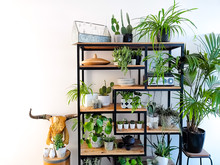 Industrial Open Shelf Cupboard Filled With Numerous House Plants In Pots Such As Cacti, Hanging Plants, Succulents, Etc Creating An Indoor Garden