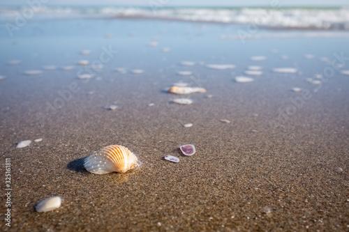 Tablou Canvas Closeup of sea shells on a golden sand beach