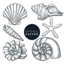 Seashells Collection. Vector Hand Drawn Sketch Illustration. Summer Travel Design Elements. Sea Shells Vintage Icons Set