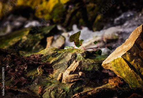 A frog on a stone basks in the warm rays of the spring sun Wallpaper Mural