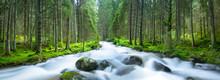 River Rushing Through Green Pi...