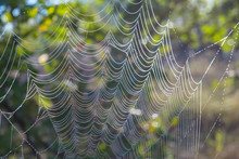 Closeup Spider Web At The Early Morning