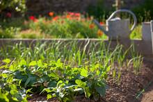 Petit Jardin Potager Naturel.