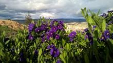 Flores Purpuras En Tarde Soleada