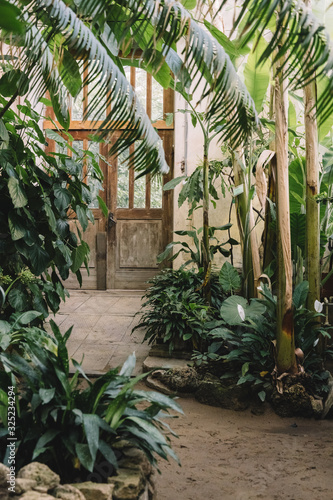 Landscape with exotic evergreen plants in greenhouse. Old tropical botanic garden. A variety of plants: palms, ferns, and conifers. In the background doors. Concept of the nature and ecology.