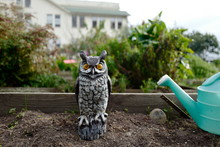 Owl Statue To Scare Birds In Garden