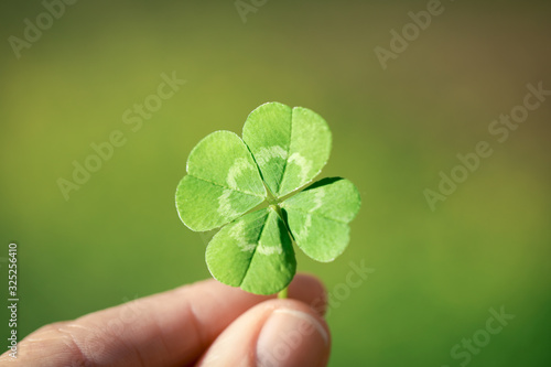 Holding a lucky four leaf clover, good luck shamrock, or lucky charm Wallpaper Mural
