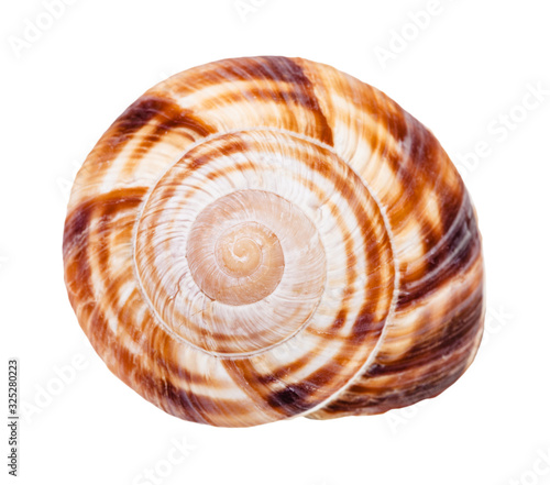 helix shell of burgundy snail isolated on white Fototapete