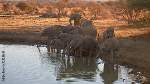 Fotografija A herd of African Elephants drinking from a Waterhole one evening, on the Madikwe Game Reserve in South Africa