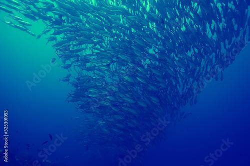 Fotografiet coral reef vintage toning / unusual landscape, underwater life, ocean nature