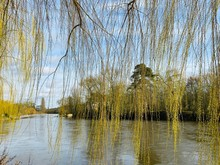 Willow Branch Trees In The River Background