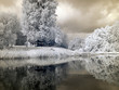 infrared photo: landscape with river, and amazing beautiful trees and glare