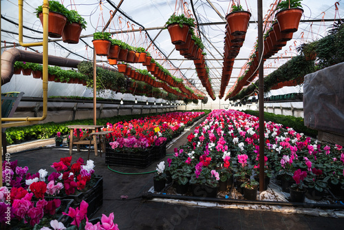 Photo Greenhouses for growing flowers. Floriculture industry