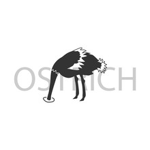 Ostrich Burying Head Into The ...