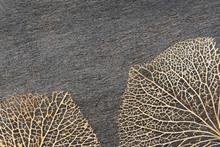 Macro Closeup Of Two Brown Dry...