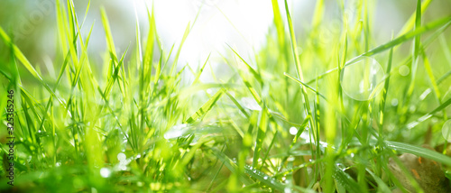 Spring meadow with bright bokeh - 325385246
