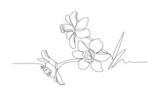 Bouquet Of Narcissus Flowers, Symbol Of Spring, Youth, Easter, Ornament, Pattern For Wedding Cards, Vector Illustration With Black Single Contour Line Isolated On White Background In Hand Drawn Style