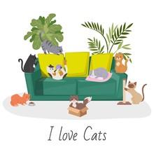 Cute Cats, Home Pets Cartoon V...