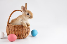 Easter Bunny Rabbit In Basket With Colorful Eggs