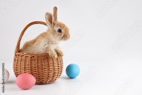 Fotografija Easter bunny rabbit in basket with colorful eggs