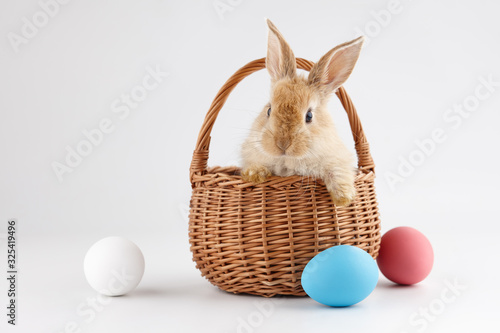 Fotografiet Easter bunny rabbit in basket with colorful eggs