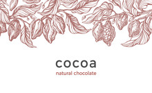 Cocoa Harvest. Vector Backgrou...