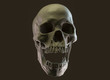 Human skull on Rich Colors a Dark Isolated Background. The concept of death, horror. A symbol of spooky Halloween. 3d rendering illustration.