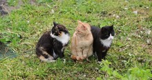 Three Cats On The Grass In The...