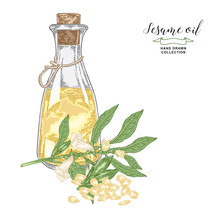 Sesame Oil Hand Drawn. Colorful Sesame Flowers, Seeds And Glass Bottle Of Oil Isolated On White Background. Vector Illustration. Engraving Style.