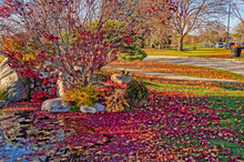 Autumn Colors, Red Maple Leave...