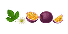 Hand Drawn Colorful Passion Fruit. Set Sketches With Cut Passion Fruit Leaf And Flower. Vector Illustration Isolated On White Background.