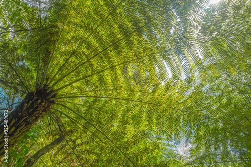 Sun shining through fern leaves #325489672