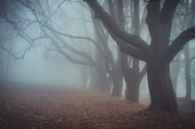 Dark Autumn Forest In The Fog