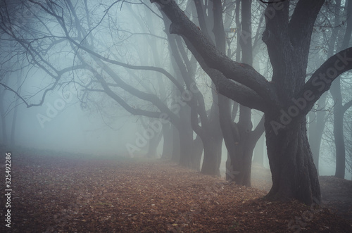 Fotomural Dark autumn forest in the fog