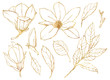 Watercolor floral set with golden flowers. Hand painted line art magnolias and leaves isolated on white background. Spring illustration for design, print, fabric or background.