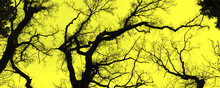 Stark Bare Tree Branches Silhouetted Against A Winter Sky. Banner.