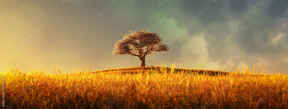 Fototapeta lonely tree in a cultivated field